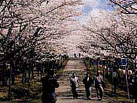 八幡丘公園