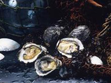 牡蠣(かき)料理